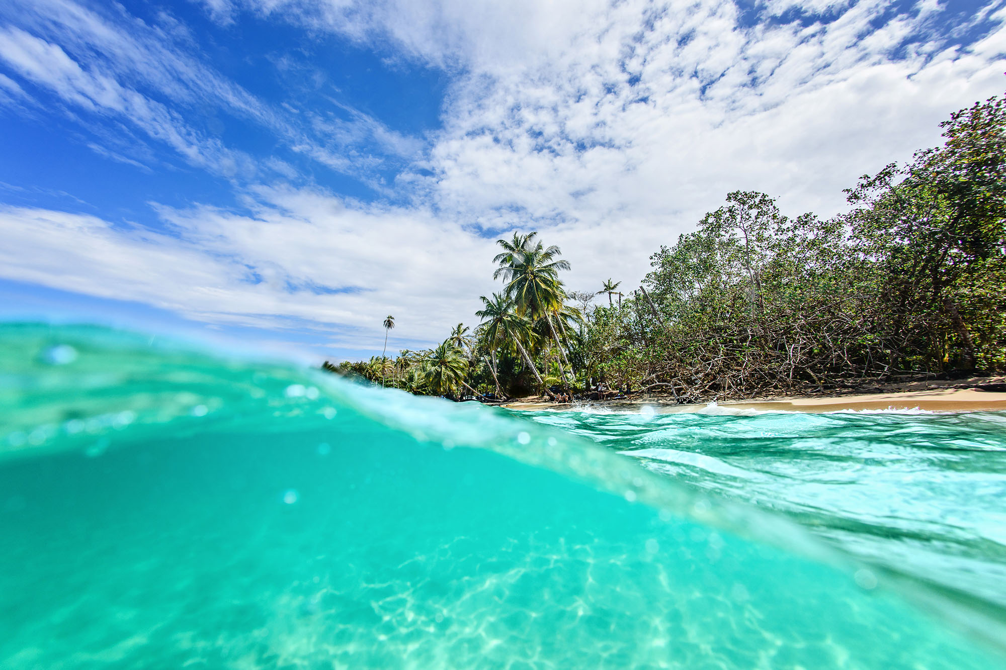Over under underwater photo with palm trees and sky in the background